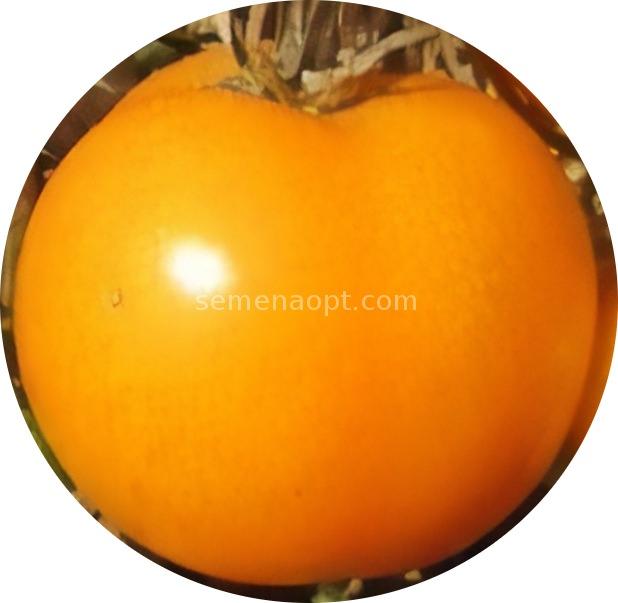 Сколько живут томаты в домашних условиях