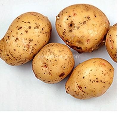 весна белая картофель купить
