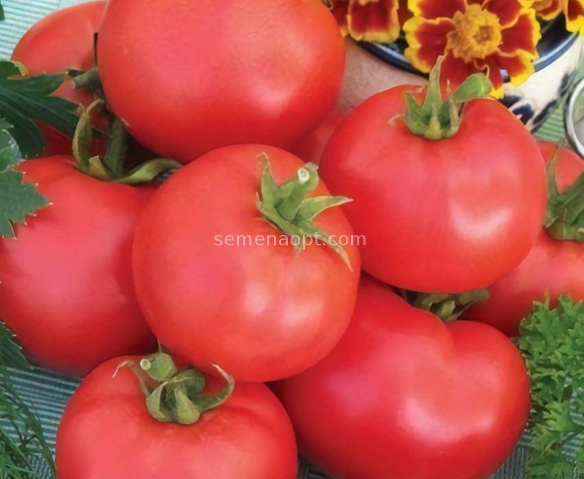 розовый фото дар заволжья помидор